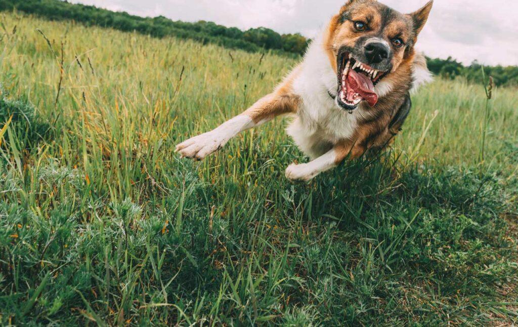 Quintana Law Arizona Dog Bite Lawyer