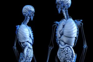 The Anatomy of a Personal Injury Case